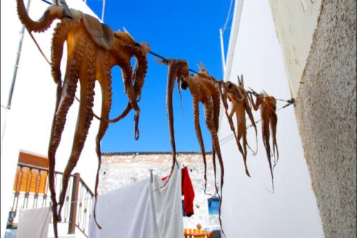 Octopus Clothesline