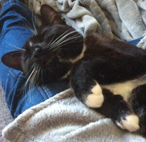 Bean Back wiskers curled paws