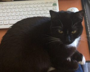 Gail Carriger Cat Lilliput Stopping Her From Writing