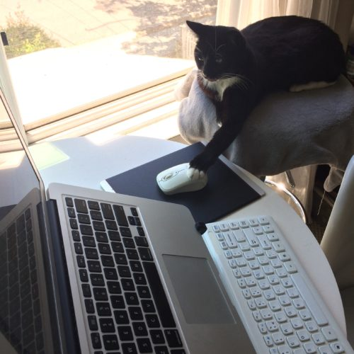 Lilliput Cat not Write Bad Laptop Mouse