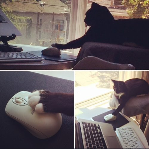 You Shall Not Write Lilliput Cat Computer Mouse