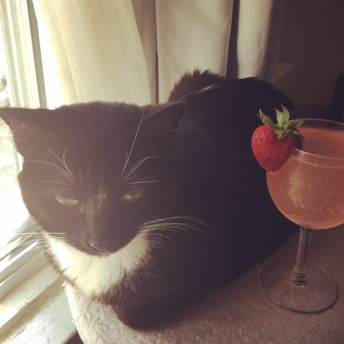 Lilliput Gail Carriger's Cat and a Pink Cocktail