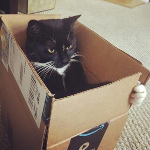 Cat Lilliput Box Vroom Paw Drive