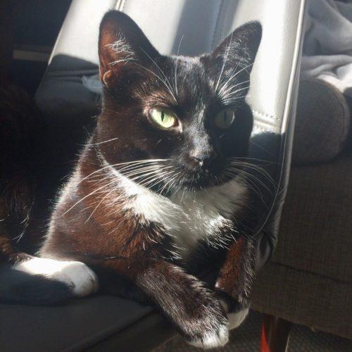 Lilliput Cat Sunbeam Supervising