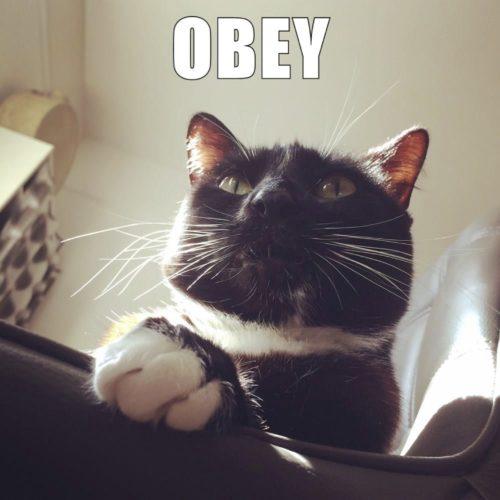Lilliput Obey Me Chair Cat Sunbeam