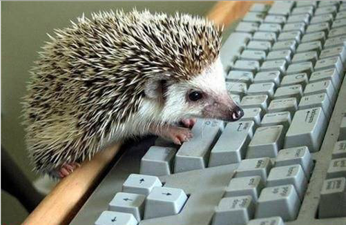 Hedgehog Typing Writer Writing Keyboard