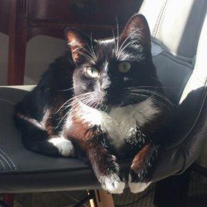Lilliput Cate Cute Seat Sunbeam Paws