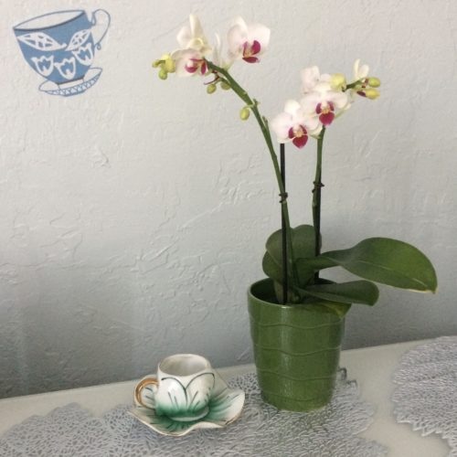 Green Teacup Orchid Stensil square