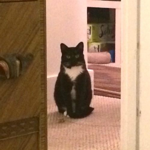 Lilliput Cat Hallway Sitting Expectant